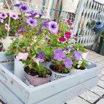 庭でも部屋でも万能なベジタブルボックス(木箱)をDIY