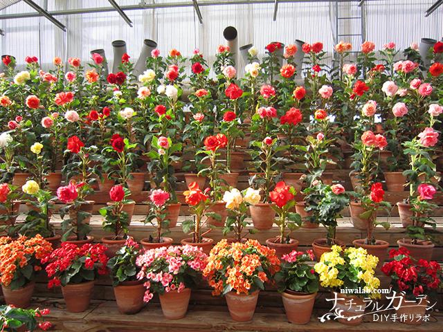 世界で最も美しい花