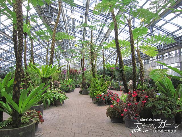 世界の植物