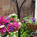 花は植えるだけじゃない!ハンギングバスケットで庭を華やかに