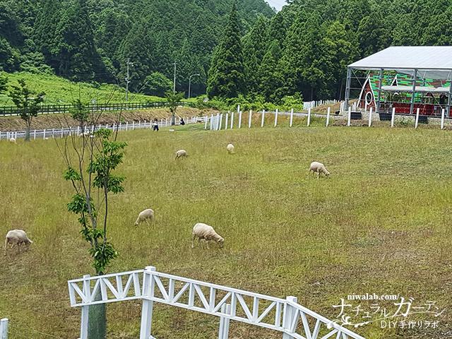 羊のふれあい牧場