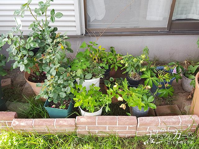 庭の鉢置き場