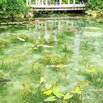 ここは夢の世界?幻想的な絵画のような「モネの池」