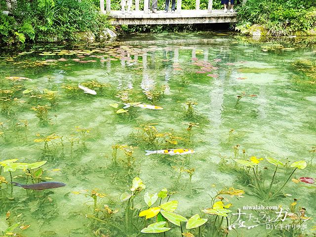 絵画のようなモネの池