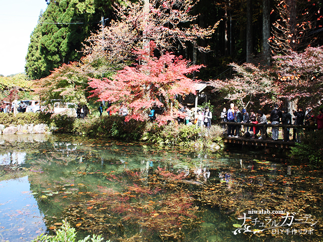 モネの池と紅葉
