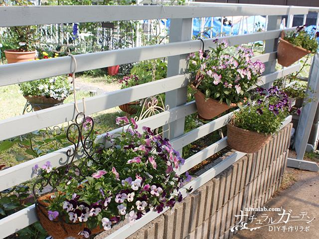 フェンスの花