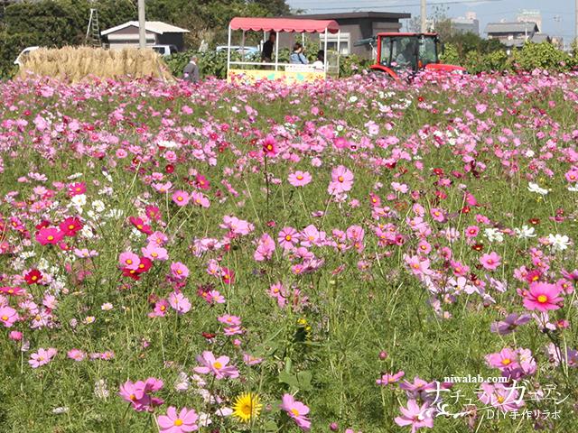 花トラクター