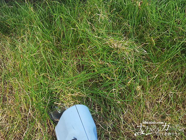 バリカンで芝刈り