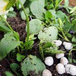 肥料を知って植物を元気に育てよう 【元肥と追肥の与え方】