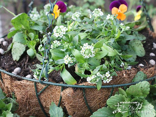 肥料と土入れ