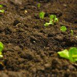 培養土?腐葉土?花を植えるための園芸用土の種類や違い