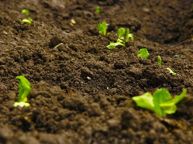 肥料の種類