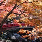 香嵐渓にも負けない美しさ!川沿いの鮮やかな「岩屋堂公園の紅葉」