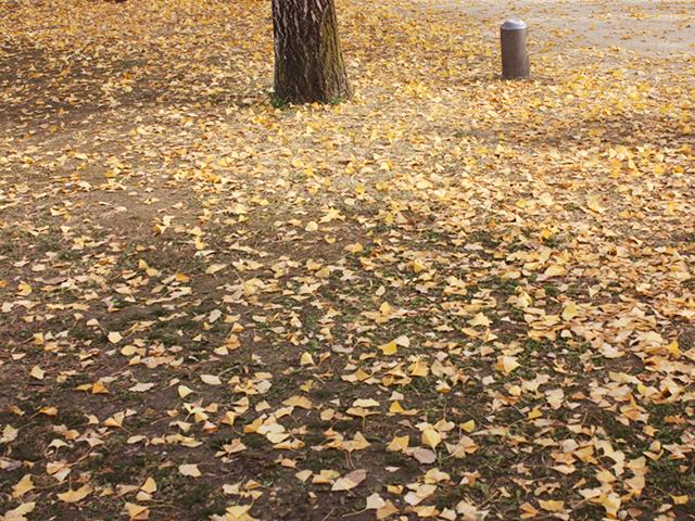 秋の学びの森