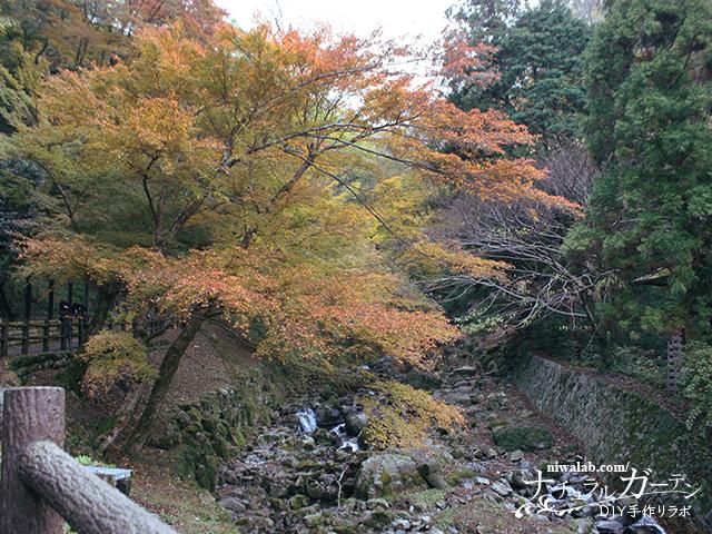 小川と紅葉