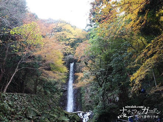 養老の滝と紅葉