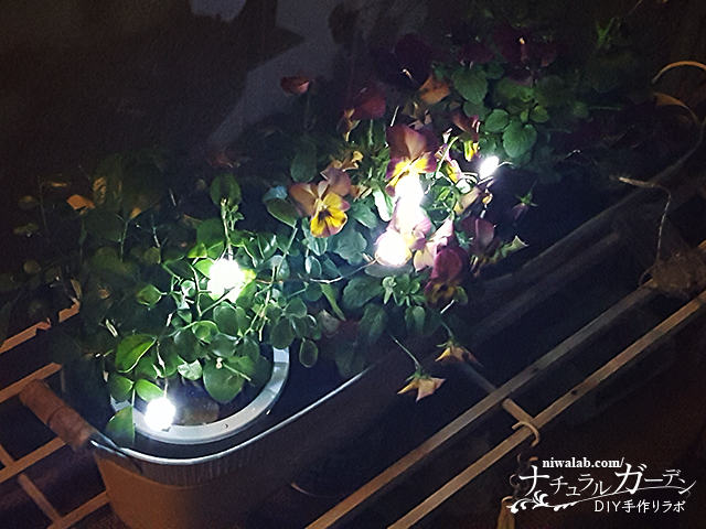 庭のクリスマスライト