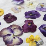 かわいさを永久に保存!アイロンを使った美しい押し花の作り方