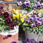 庭に飾りたいアンティークなブリキの寄せ植えとブリキ雑貨のすすめ