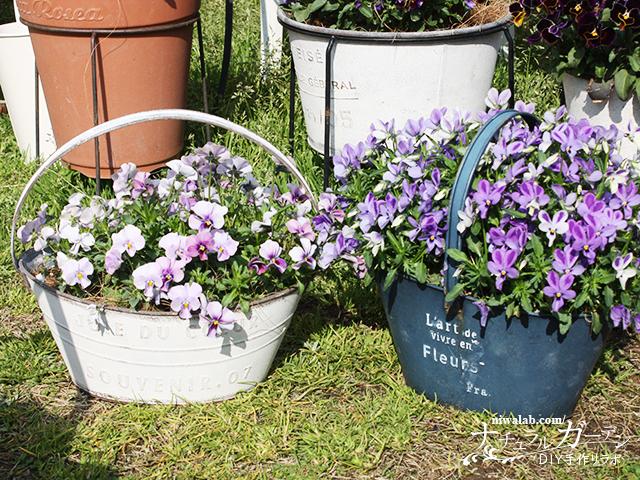 ブリキ鉢の花