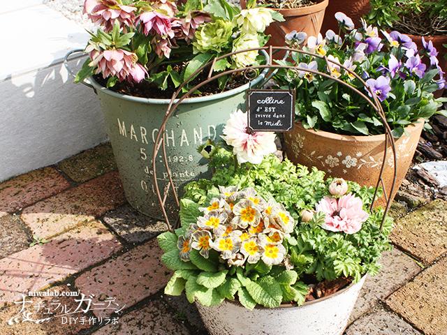 庭のブリキ鉢