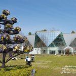 花と緑に囲まれたうるおい空間!「フラワーパーク江南」で春を先取り