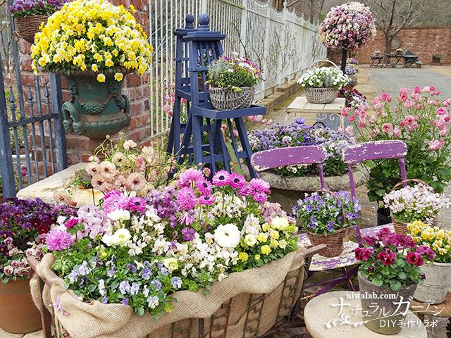 ローザンベリーの花