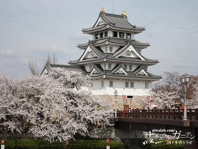 墨俣一夜城と桜
