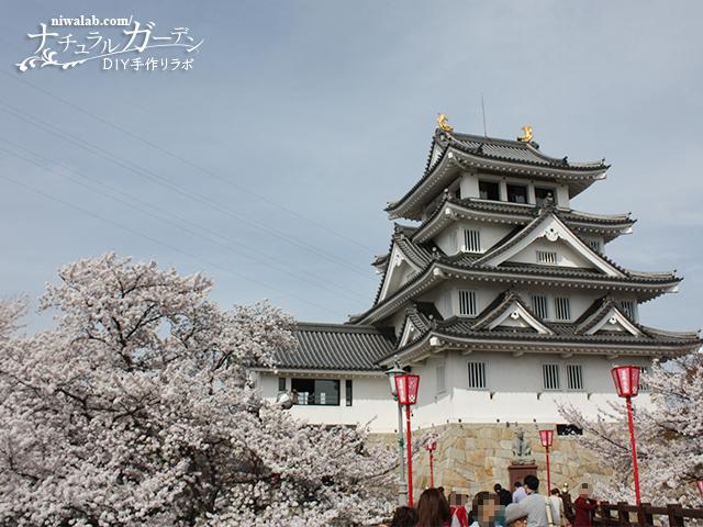 一夜城と桜