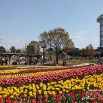 150品種16万球の春の絶景「木曽三川公園センターチューリップ祭」