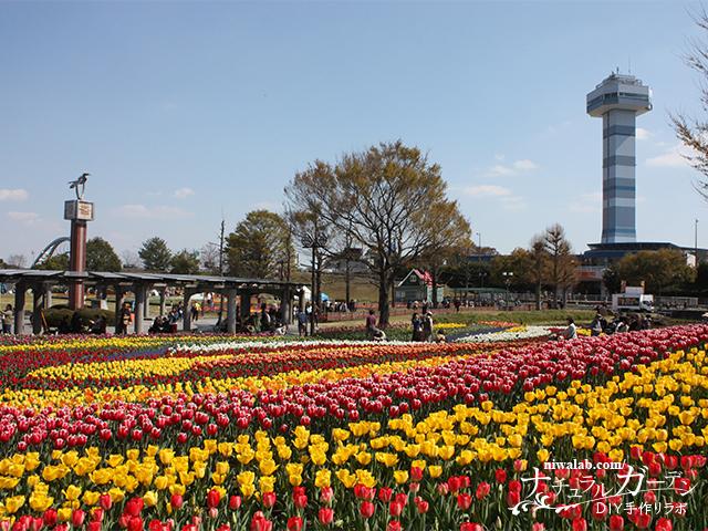 木曽三川公園チューリップまつり