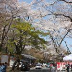 山と渓谷ののどかなお花見スポット!「霞間ヶ渓(かまがたに)の桜」