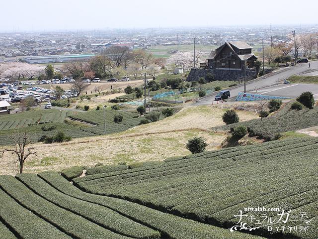 霞間ヶ渓茶畑