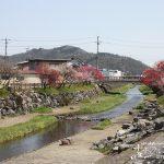 川岸を色彩豊かに彩る「揖斐川町桂川沿いのはなもも街道」