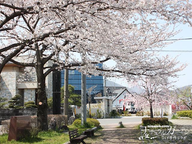 桜とはなもも