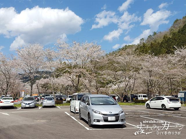 寺尾ヶ原千本桜駐車場