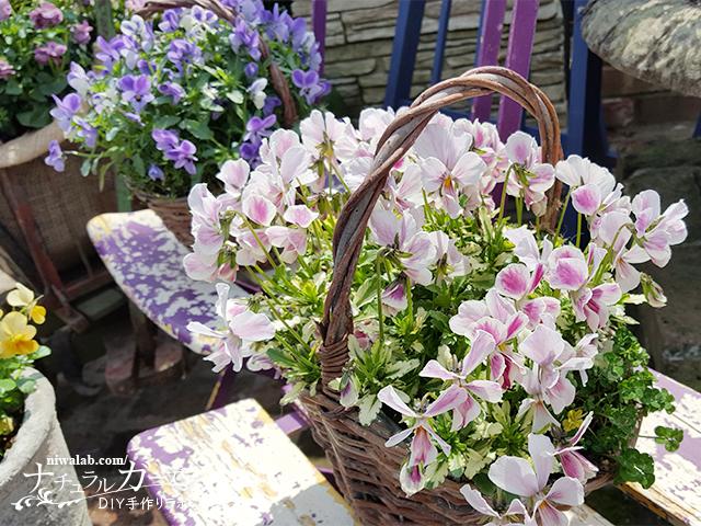 カゴに花を植える