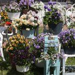 春に庭で育てたい花 『チェリーガーデン春の花コレクション』