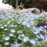 花博の会場となった湖畔の美しい都市公園「浜名湖ガーデンパーク」