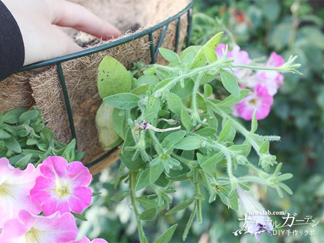 2段目の花を入れる