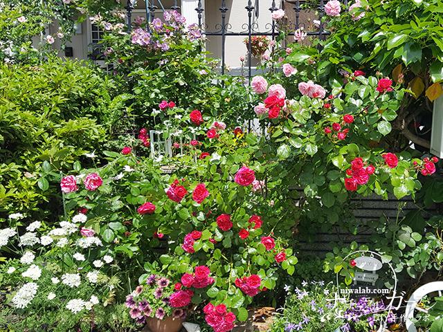 アプローチの花壇