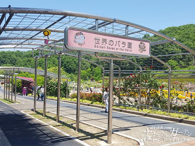 花フェスタ記念公園世界のバラ園