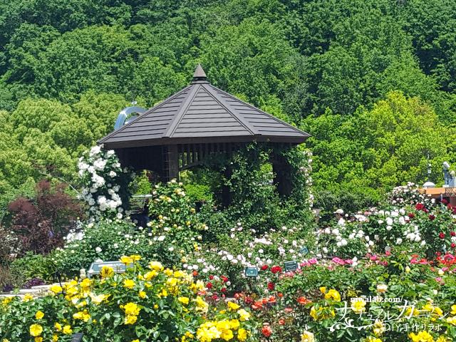 バラが庭う庭園