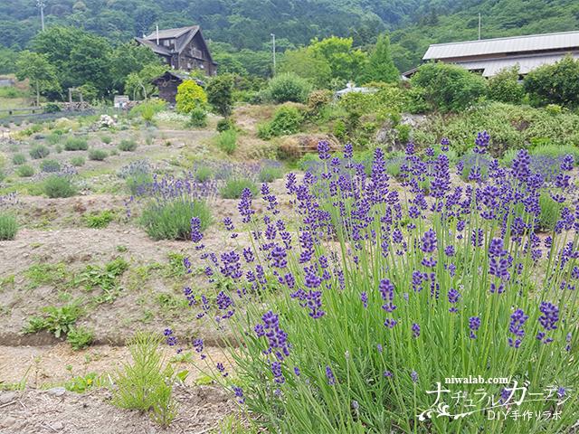 池田山とラベンダー