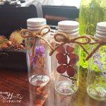 【小さな植物標本】 セリアの材料で作るシンプルなドライフラワーボトル