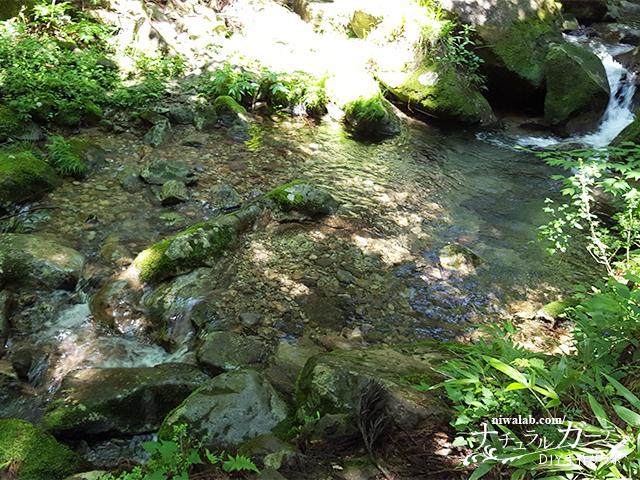 澄んだ水と大自然