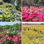 四季折々の花を見に行こう!岐阜県の花の名所・花の絶景