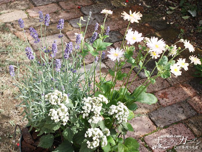 長い花の寄せ植え