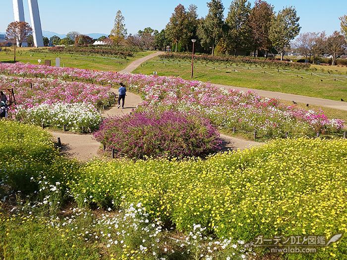 園内のコスモス畑