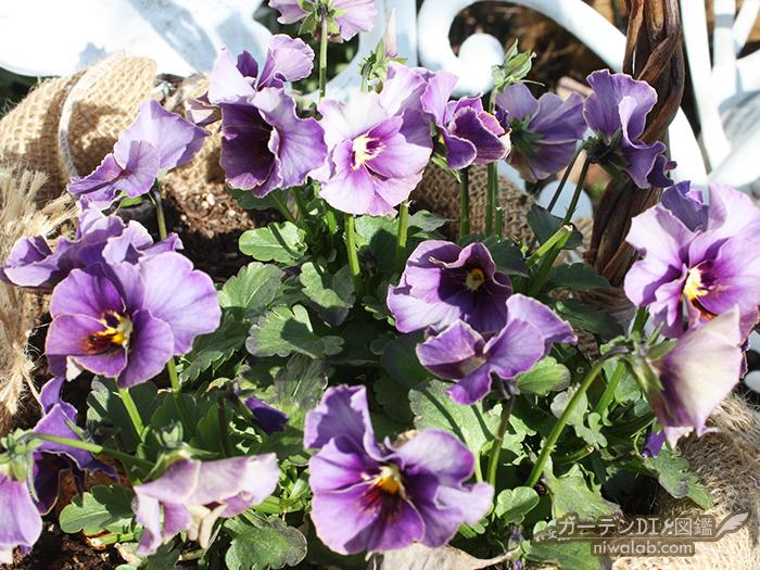 オンリーワンの花